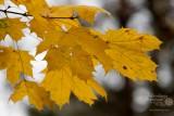 Jesień w Pustkowie