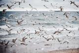 Na plaży w Rewalu