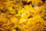Jesień w Pobierowie