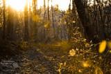 Las pomiędzy Rewalem a Niechorzem