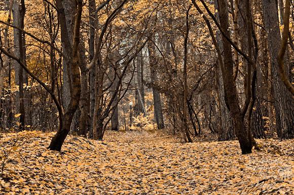 Las łączący Pustkowo z Pobierowem