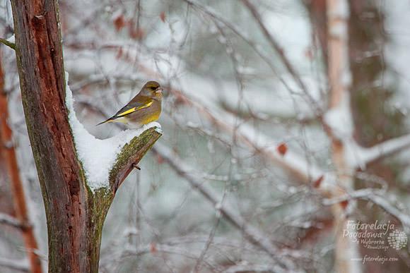 Ptasi popis w Pobierowie