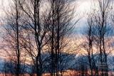 Na skraju lasu w Pobierowie