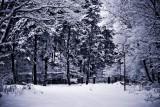 Zima w Pustkowie