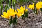 Wiosna w Pobierowie